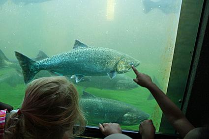 Ballard locks my ballard for Big fish seattle