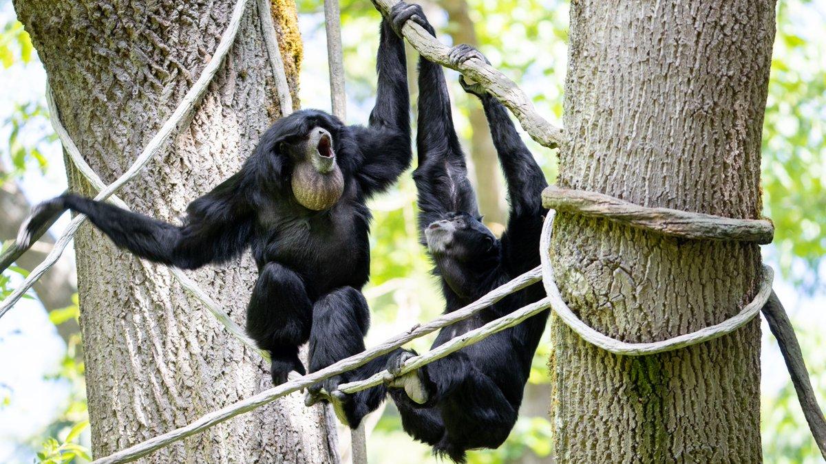 Woodland Park Zoo To Reopen On July 1 My Ballard